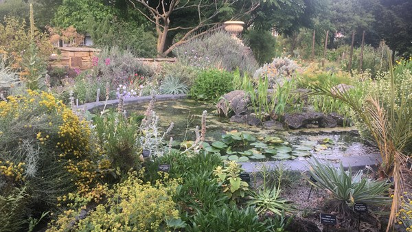 Pond Rockery at the Chelsea Physic Garden